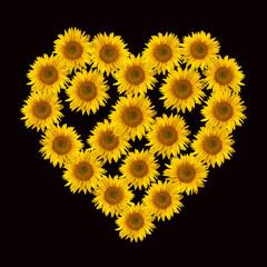 Blumenherz, Sonnenblume, Helianthus, annuus,
