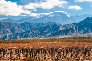Volcano Aconcagua and Vineyard. Aconcagua is the highest mountai