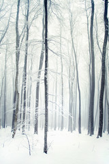 Winter forest