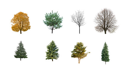 autumn on winter trees