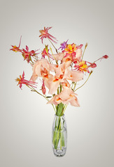 bouquet of spring pink Iris flowers and bell-flowering in vase