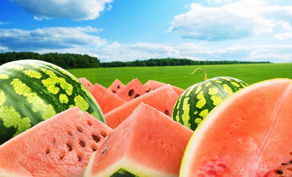 Heap of watermelon