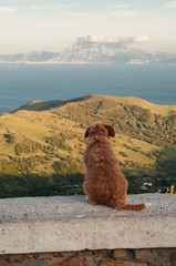 Lonely dog ??sitting and looking