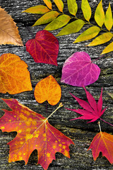 Fototapete - Abstract background of autumn leaves.