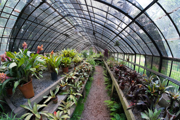 Greenhouse interior full of pots and plants