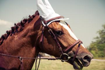 Portrait of a horse, Vintage retro style.