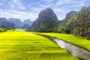 Poster Jaune Rice field and river, NinhBinh, vietnam landscapes