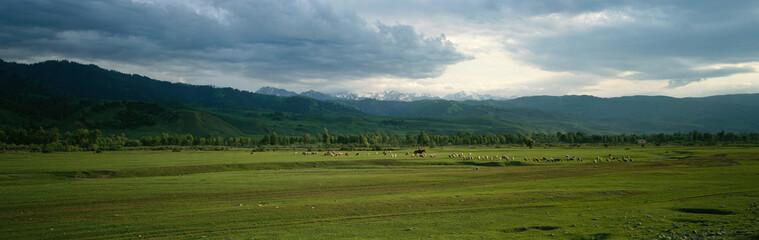 herds on grassland