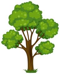 Wall Mural - A tall tree