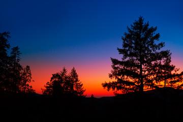 Photo sur Aluminium Parc Naturel Sunset in Yosemite National Park with tree silhouettes