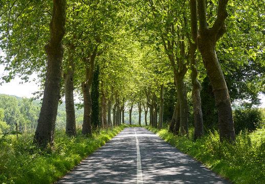 Road near Albi (France)