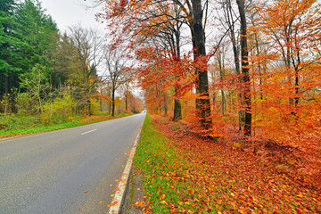 Wall Mural - Autumn forest with road. Belgium. Ardennes.