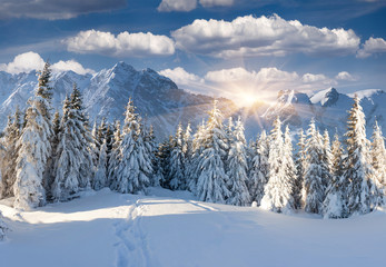 Wall Mural - Beautiful winter landscape in the mountains