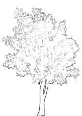 tree sketch isolated on white background