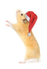 Christmas hamster