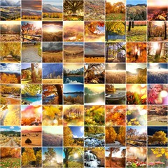Wall Mural - Autumn collage