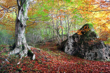 Wall Mural - forest in autumn with a rock