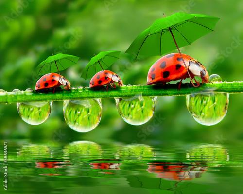 природа божья коровка цветок макро насекомое животное  № 3856380 бесплатно