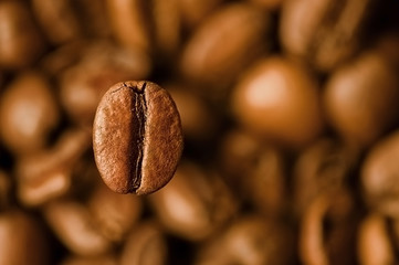 Closeup of coffee bean