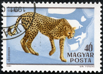 stamp printed in HUNGARY shows a Acinonyx jubatus
