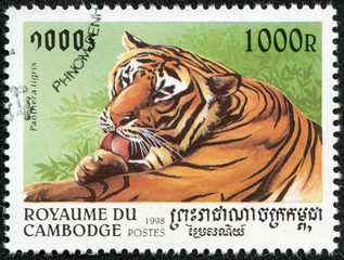 stamp printed in Cambodia shows panthera tigris