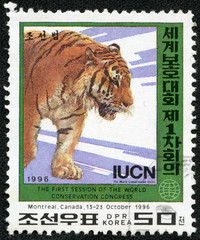 stamp printed in DPR Korea shows tiger