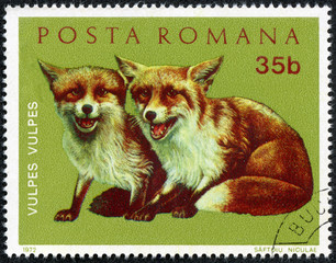 stamp printed in Romania shows image of young foxes