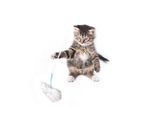 gray striped kitten play whit heart.
