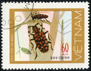 stamp printed in VIETNAM, shows mottled red beetles woodcutters