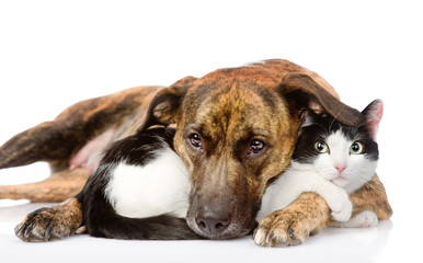 Wall Mural - mixed breed dog and cat lying together. isolated on white