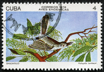 stamp printed in CUBA shows Cuban Gnatcatcher