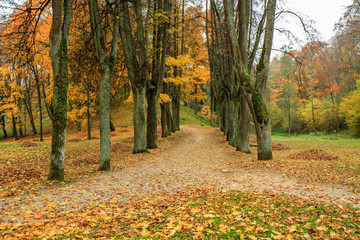 trail in the park in autumn