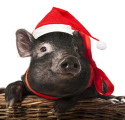 little black pig with a red santa cap