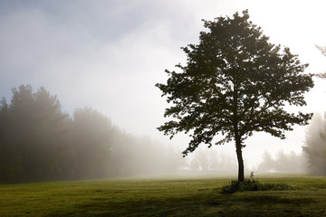 Lonely tree in a chilly morning