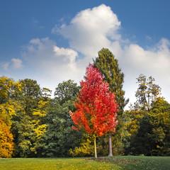 Fototapete - Autumn Landscape.