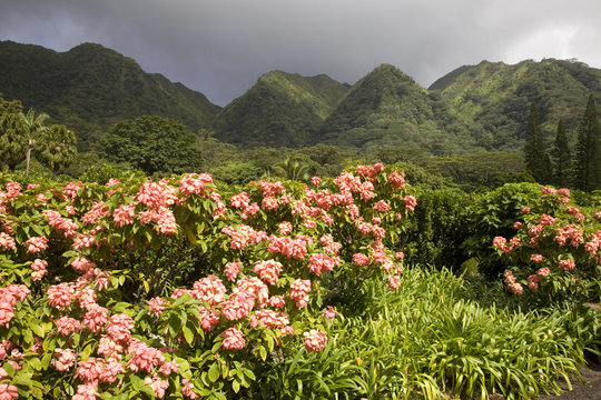 The Harold L Lyon Arboretum botanical gardens, Honolulu, Hawaii.