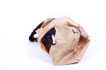 Black cat in a paper bag on white background
