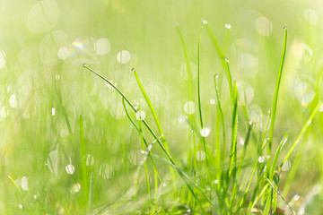 Green grass texture with water drops.