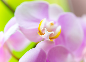 beautiful purple orchid flower