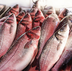 fresh red snapper for sale in a fish market.