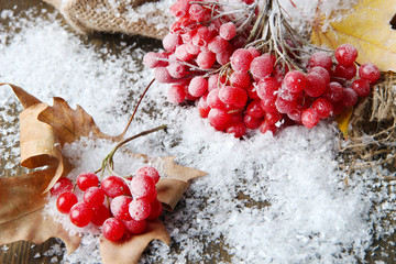 Red berries of viburnum and snow