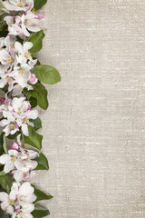 Apple blossoms border