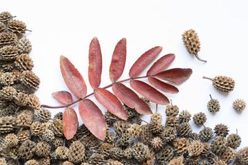 tree leaf fall