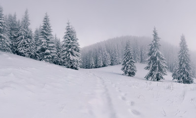 Foggy winter landscape in the mountain forest