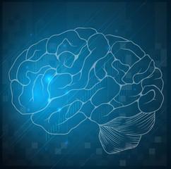 Sketch of a human brain