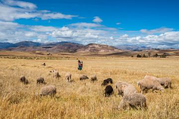 Fototapete - woman shepherd peruvian Andes  Cuzco Peru