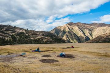 Fototapete - women collecting moraya  Chincheros town peruvian Andes  Cuzco P