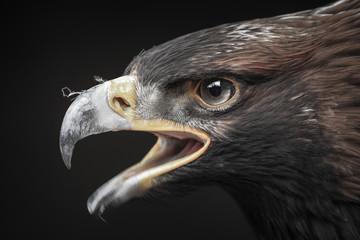 portret van adelaar
