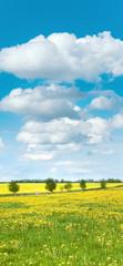 Fototapete - Endlich Frühling, Blumenwiese, sonnige Landschaft, Banner