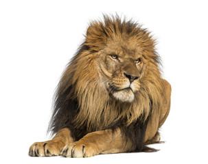 Foto auf Leinwand Löwe Lion lying down, looking away, Panthera Leo, 10 years old